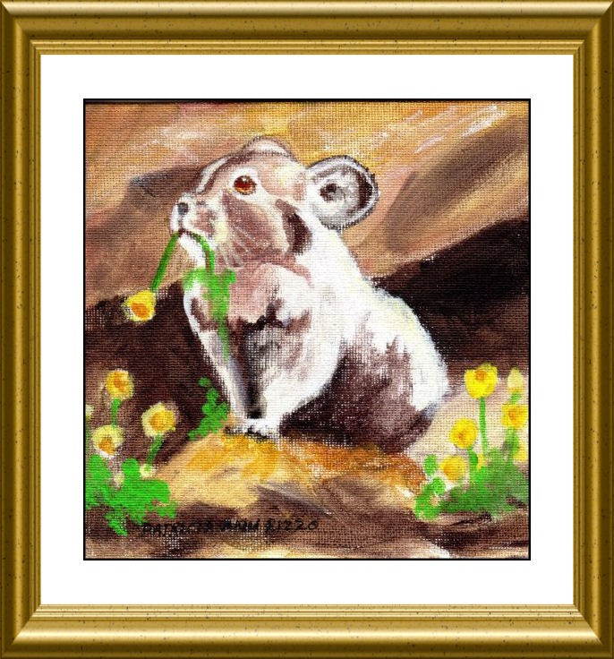 """Cute Little Pika"" original fine art by Patricia Ann Rizzo"