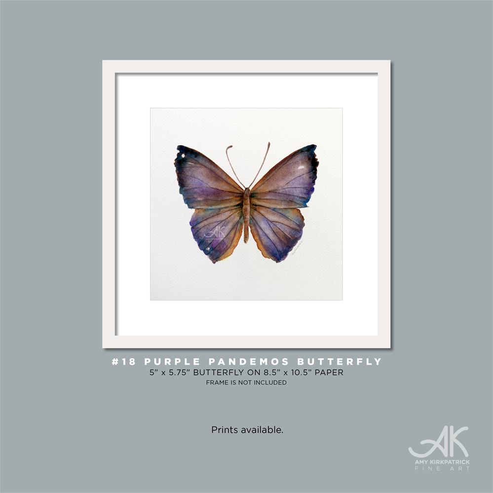 """#18 Purple Pandemos Butterfly #0327"" original fine art by Amy Kirkpatrick"