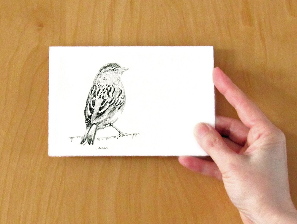 """Sketch of a Little Sparrow"" original fine art by Corinne Aelbers"