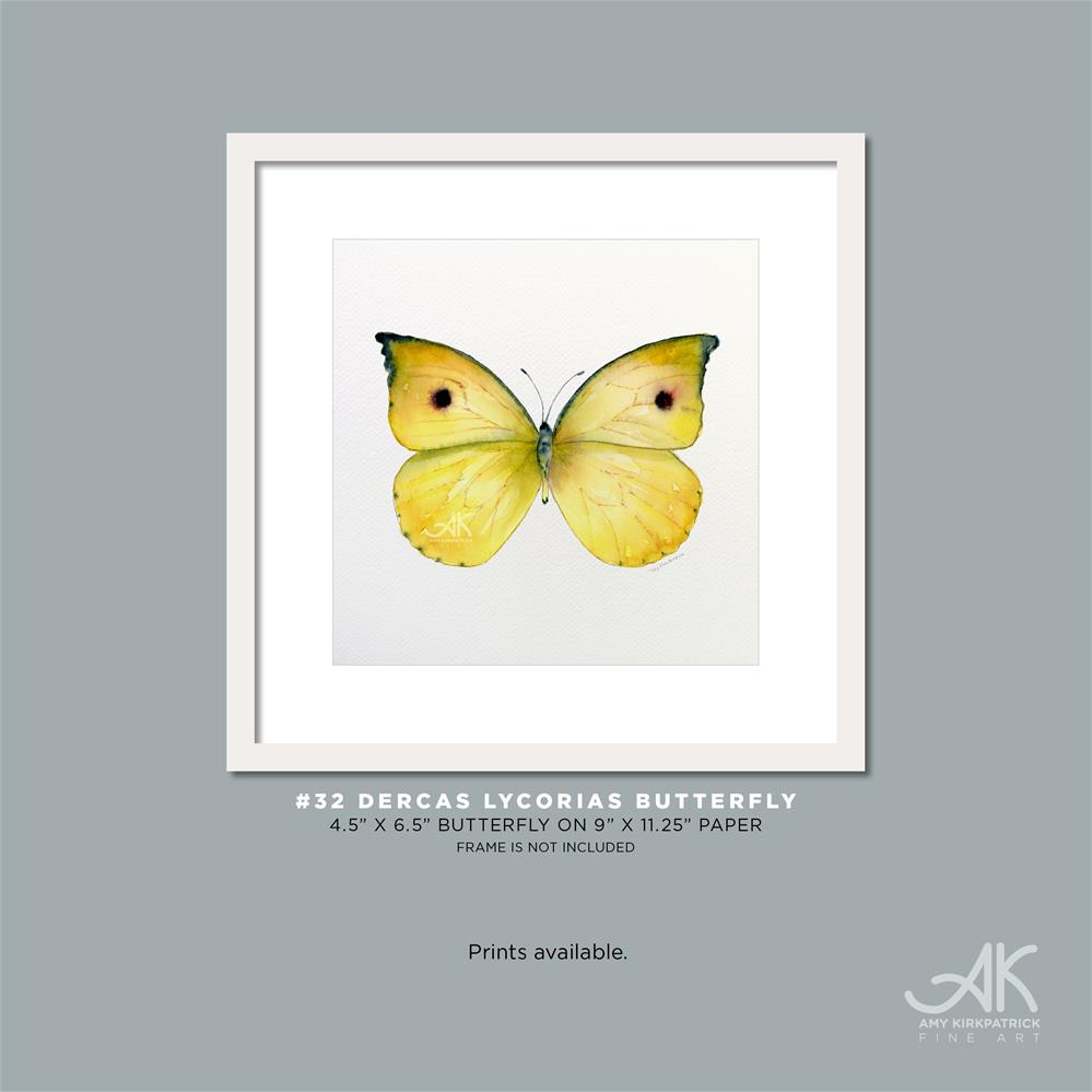 """#32 Dercas Lycorias Butterfly #0341"" original fine art by Amy Kirkpatrick"