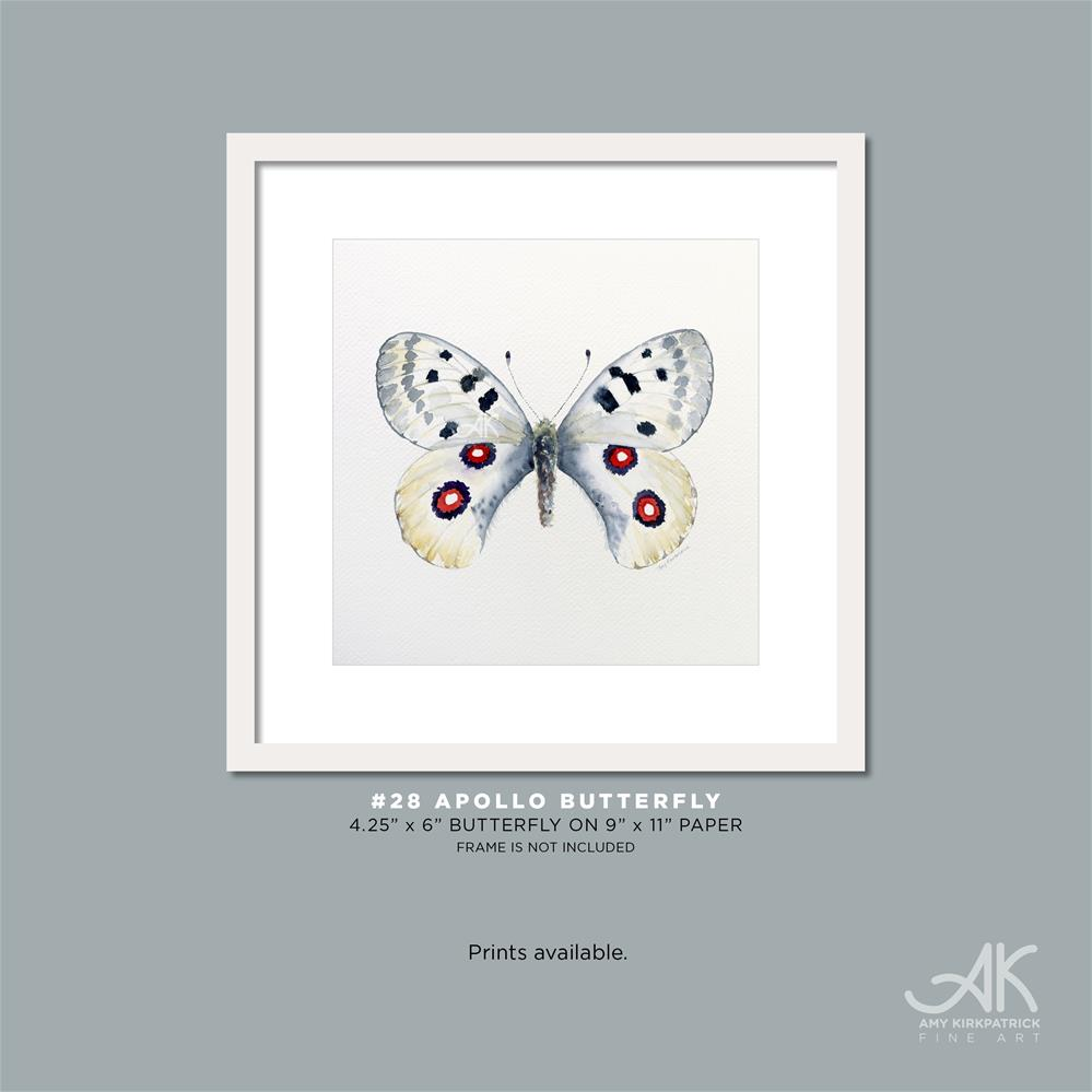 """#28 Apollow Butterfly #0337"" original fine art by Amy Kirkpatrick"