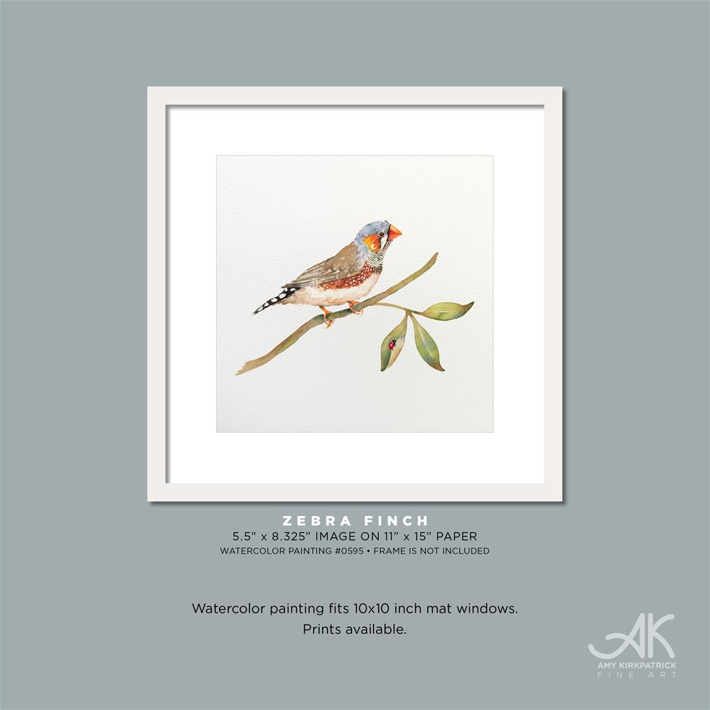 """ZEBRA FINCH #0595"" original fine art by Amy Kirkpatrick"