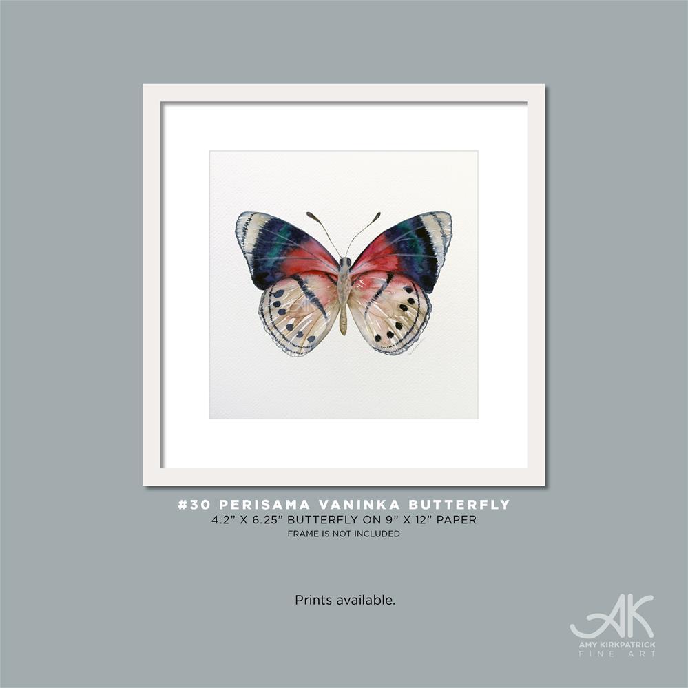 """""""#30 Perisama Vaninka Butterfly #0339"""" original fine art by Amy Kirkpatrick"""