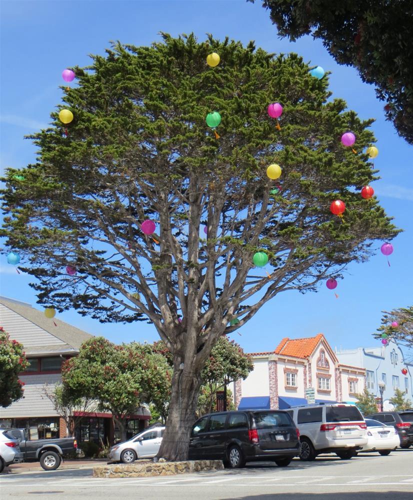 """Celebrating Pacific Grove"" original fine art by Rhett Regina Owings"