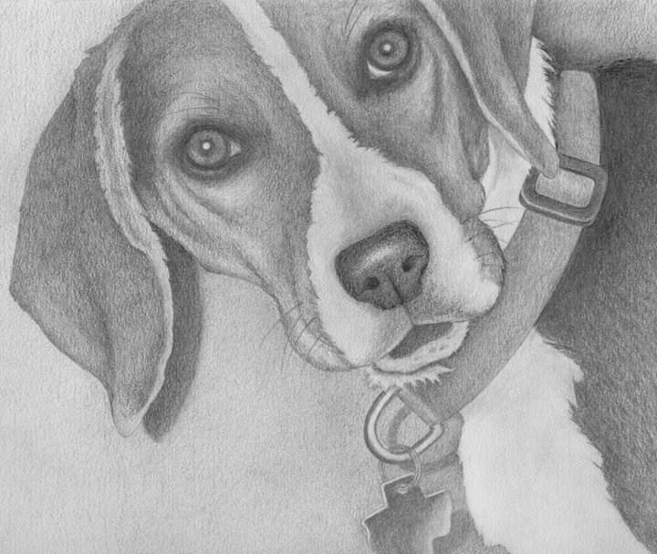 """""""Raider"""" original fine art by Darla McDowell"""