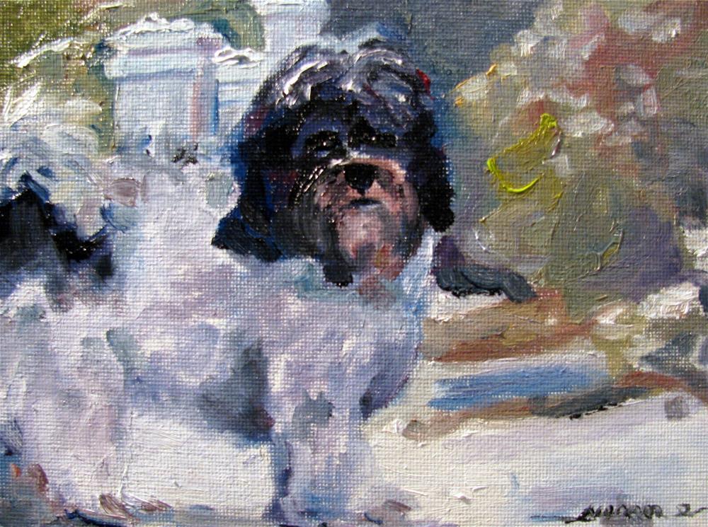 """""""Percy in the Snow"""" original fine art by Susan Elizabeth Jones"""
