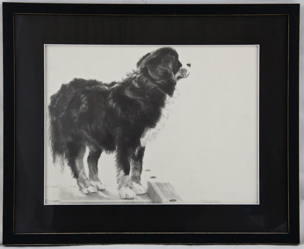 """The Bernese Mountain Dog framed"" original fine art by C J Roughton"