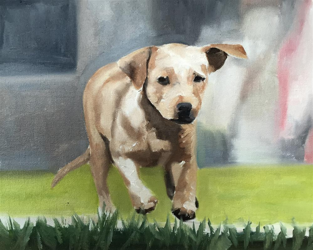 """Run Doggy"" original fine art by James Coates"