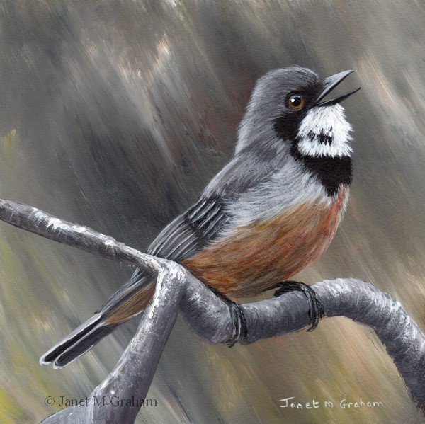 """Rufous Whistler"" original fine art by Janet Graham"