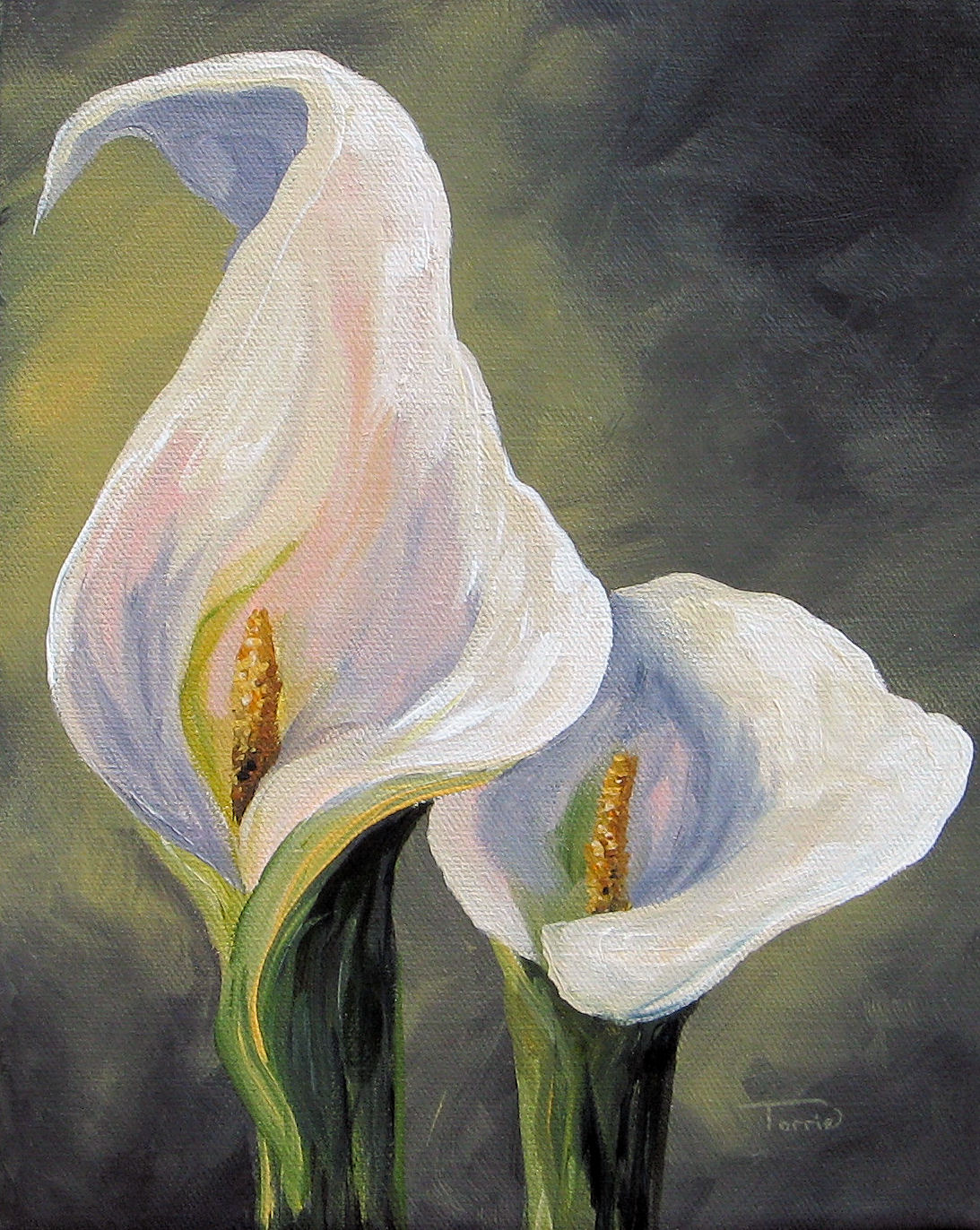 """Claudia's Calla Lilies"" original fine art by Torrie Smiley"