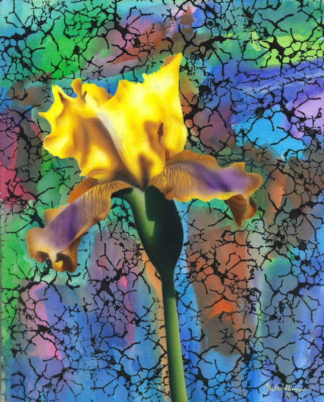 """""""Iris with Colorful Abstract"""" original fine art by Fred Schollmeyer"""
