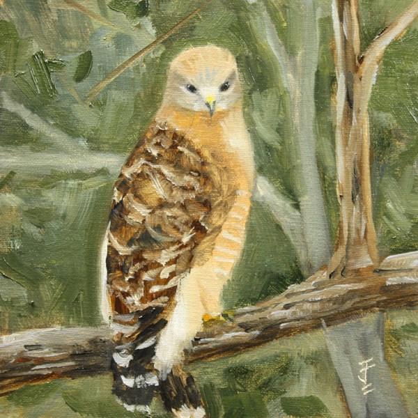 """Red Shouldered Hawk"" original fine art by Jane Frederick"