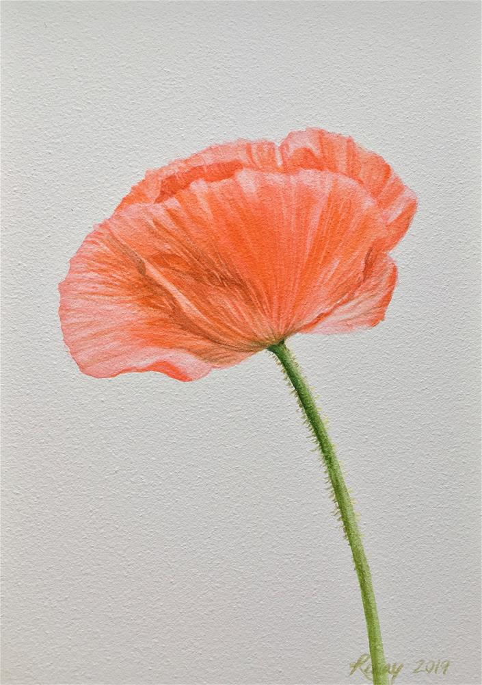 """Poppy study 1/24/19"" original fine art by Renay Shaffer"