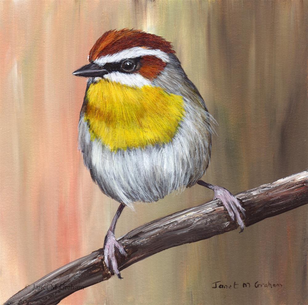 """Rufous Capped Warbler No 2"" original fine art by Janet Graham"