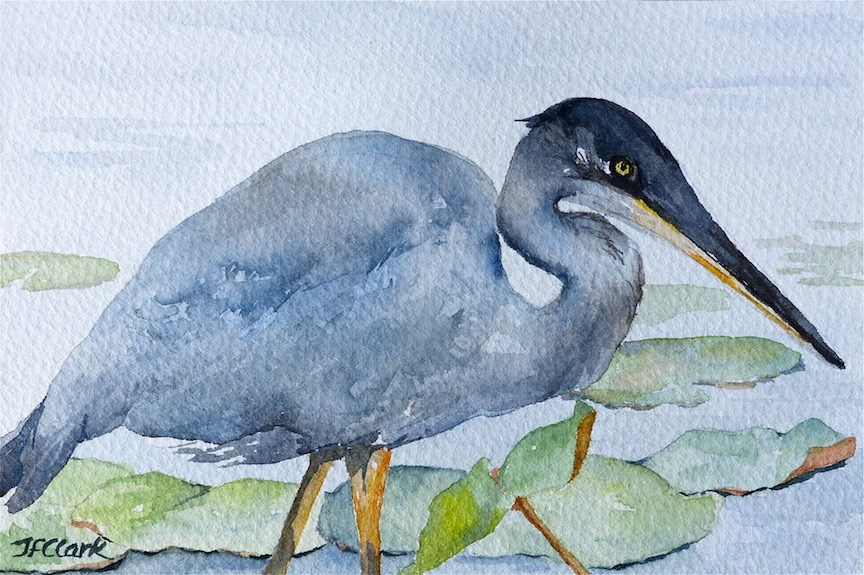 """Great Blue Heron"" original fine art by Judith Freeman Clark"