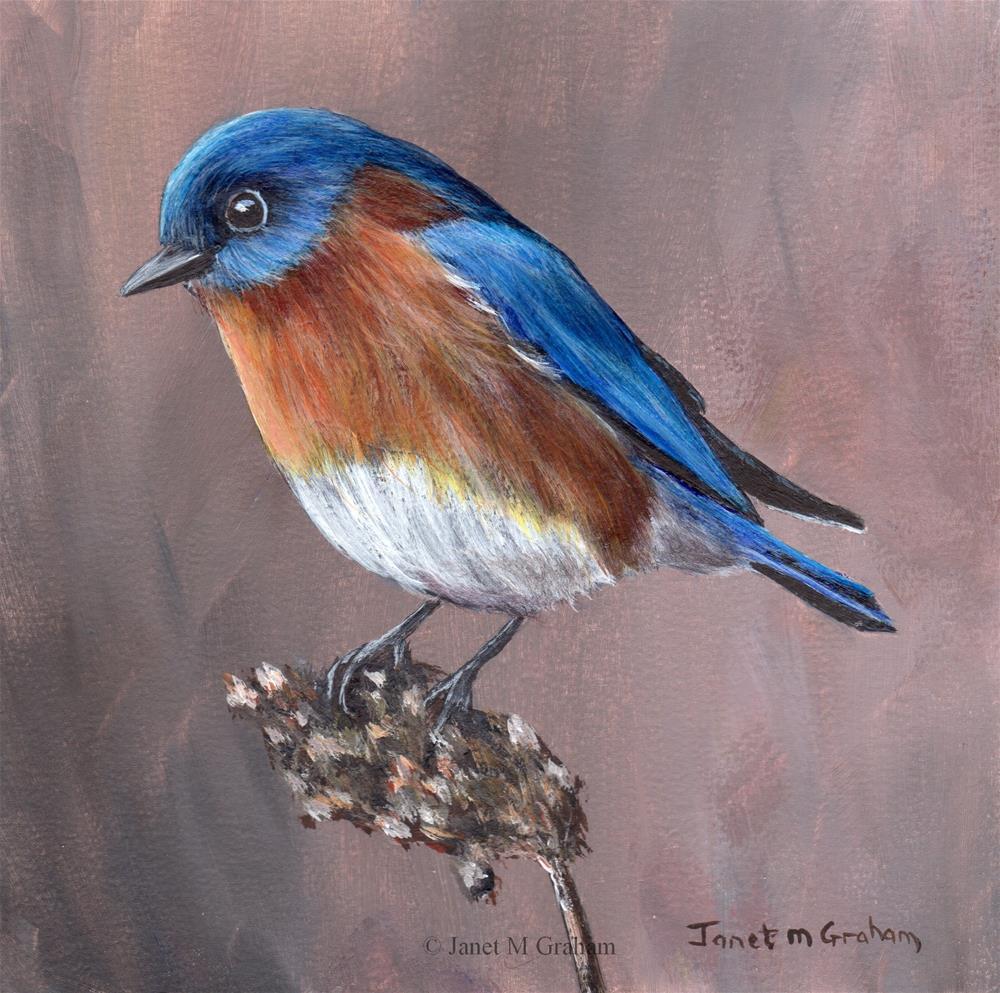 """Eastern Bluebird No 2"" original fine art by Janet Graham"