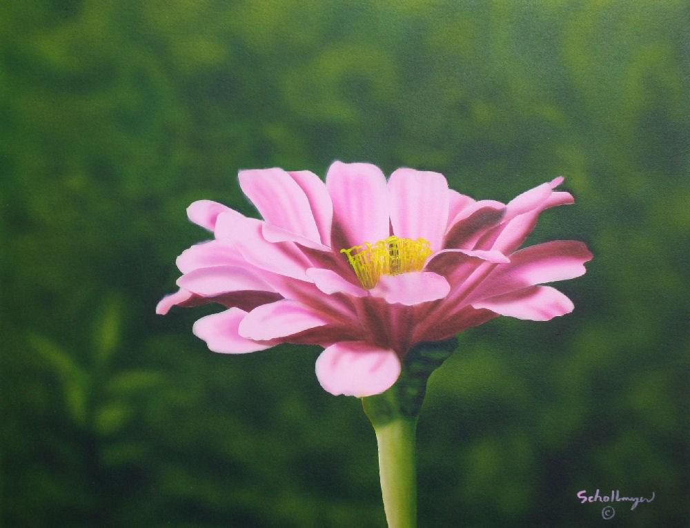 """""""Zinnia Beauty"""" original fine art by Fred Schollmeyer"""