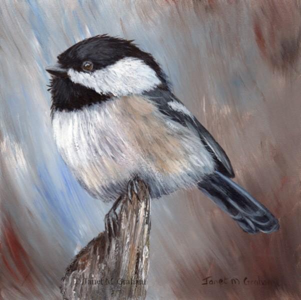 """""""Black Capped Chickadee No 12"""" original fine art by Janet Graham"""