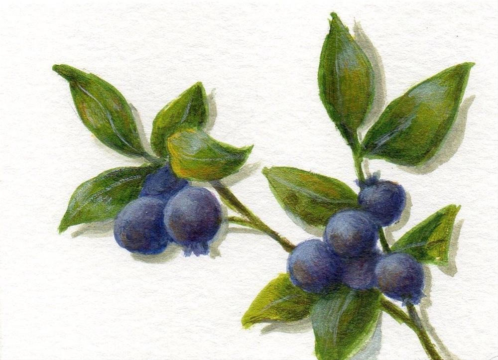 """Wild Blueberries 1"" original fine art by Debbie Shirley"