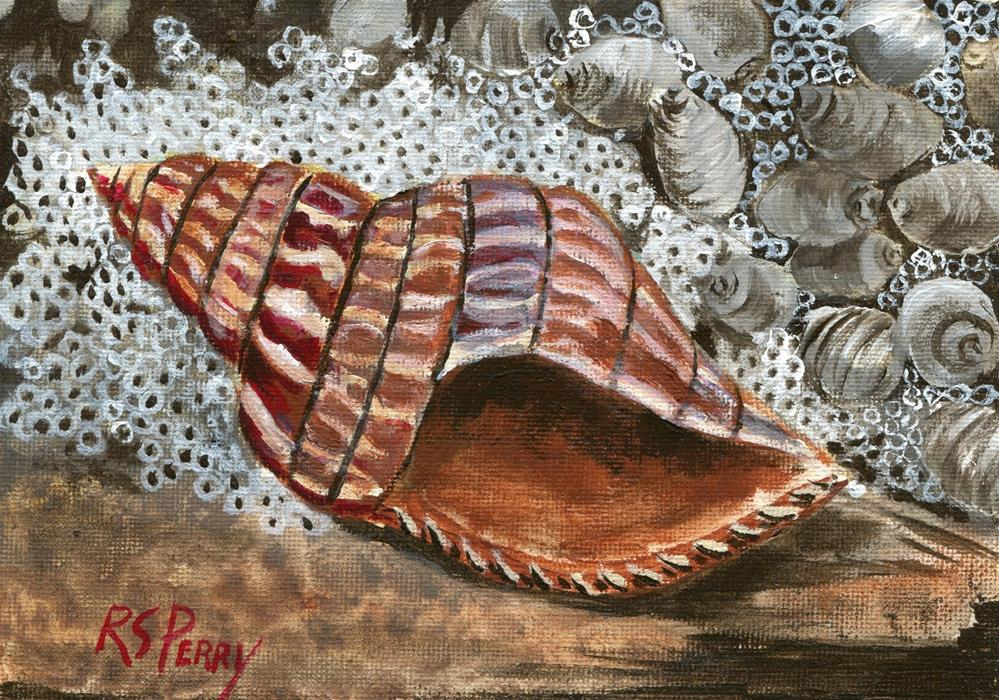 """Seashells, sea shells, whelks, banded tulip "" original fine art by R. S. Perry"