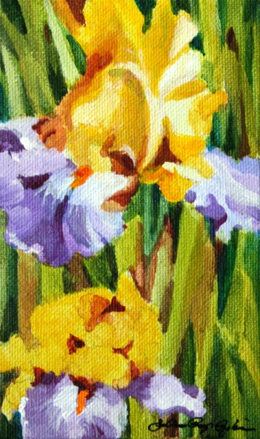 """""""Bearded with Yellows and lavender"""" original fine art by JoAnne Perez Robinson"""
