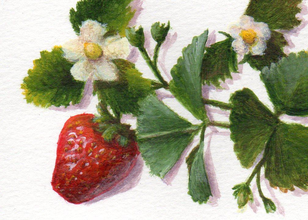 """Sweet Strawberry"" original fine art by Debbie Shirley"