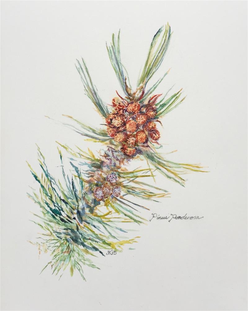"""Pinus Ponderosa"" original fine art by Jean Krueger"