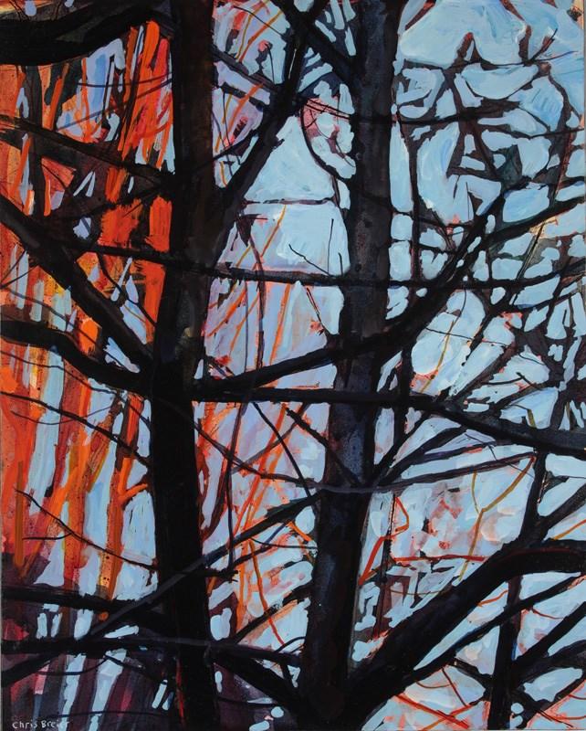 """""""Sunlit Trees"""" original fine art by Chris Breier"""