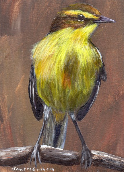"""""""Yellow Wagtail ACEO"""" original fine art by Janet Graham"""