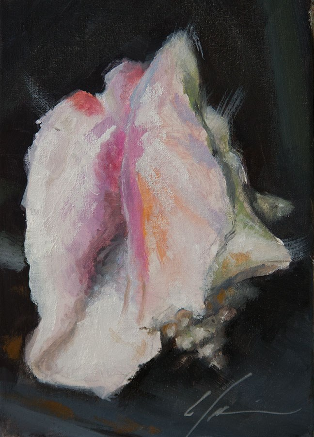"""Conch"" original fine art by Clair Hartmann"
