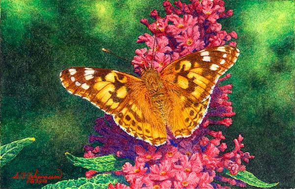 """""Painted Lady on Buddleia"" (Cynthia cardui)"" original fine art by Steven Thor Johanneson"