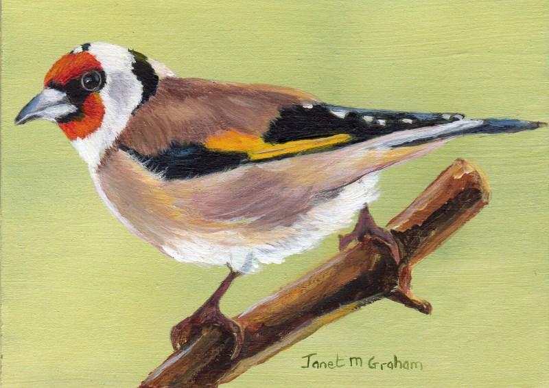 """European Goldfinch ACEO"" original fine art by Janet Graham"