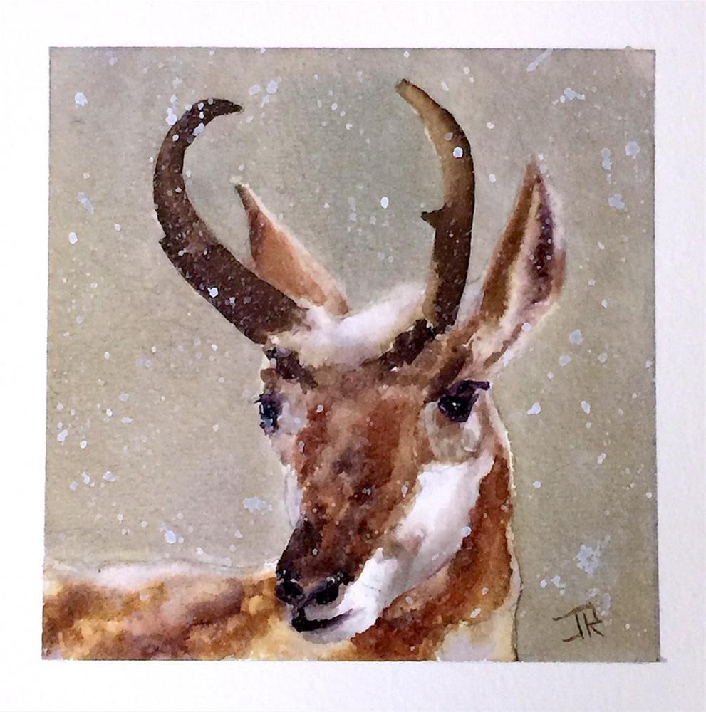 """Pronghorn"" original fine art by June Rollins"