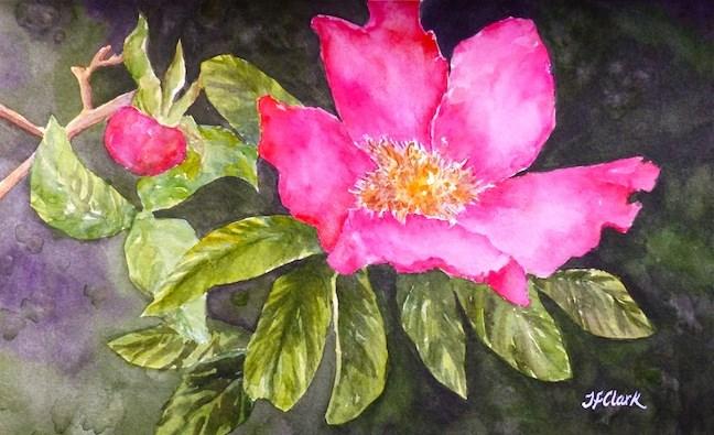 """To a Wild Rose"" original fine art by Judith Freeman Clark"