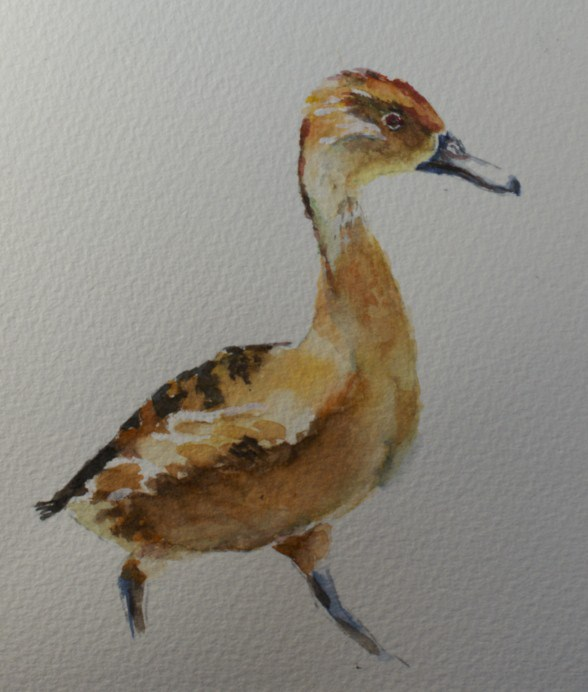 """Little Red Duck"" original fine art by Sue Churchgrant"