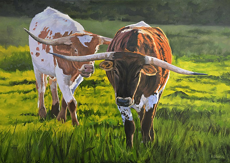 """""""Longhorn Afternoon"""" original fine art by Andy Sewell"""