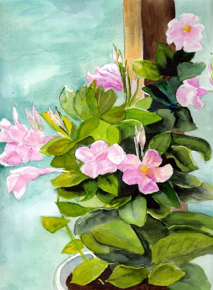 """Mandevilla Vine"" original fine art by Bunny Griffeth"