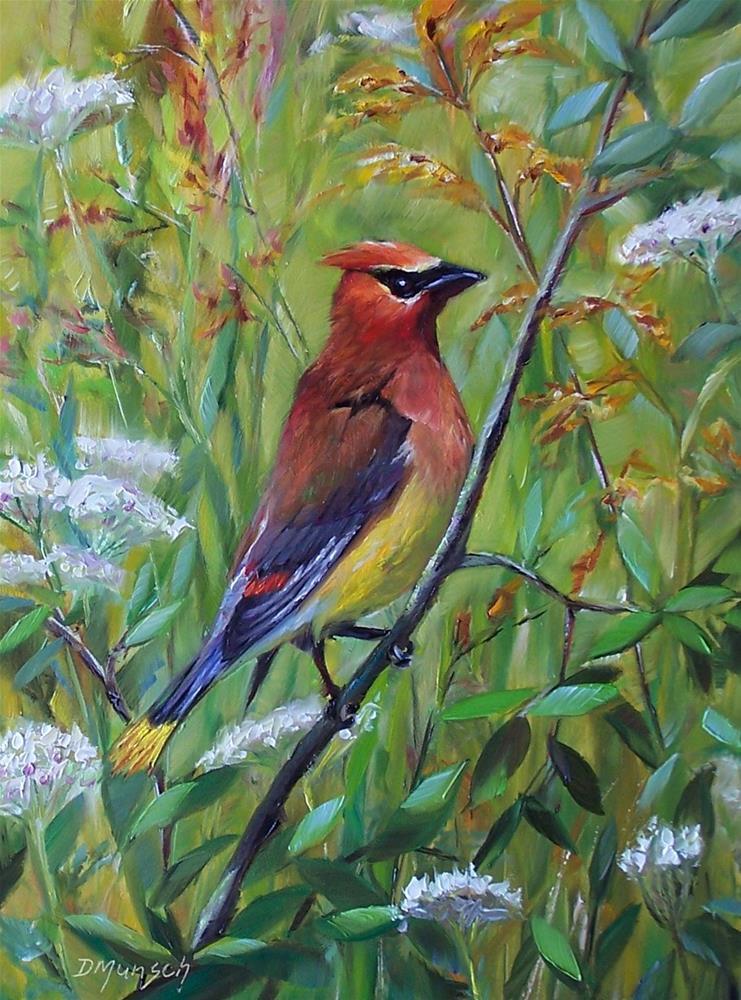 """""""Cedar Waxwing"""" original fine art by Donna Munsch"""
