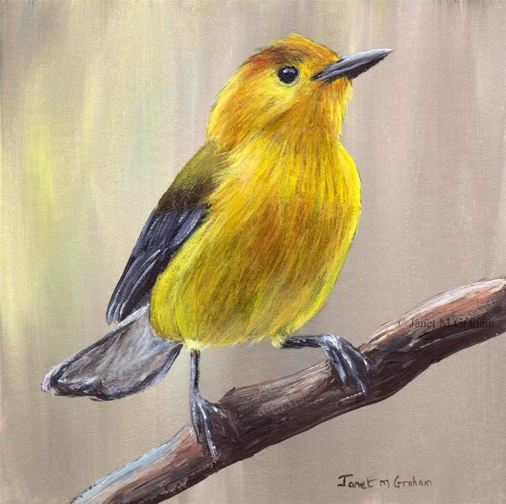 """""""Prothonotary Warbler"""" original fine art by Janet Graham"""