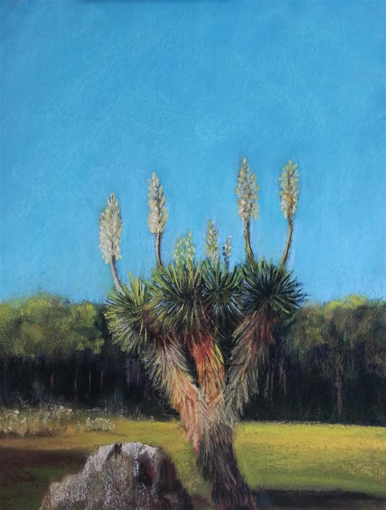 """Sharp Dressed Yucca #2"" original fine art by Anna Lisa Leal"