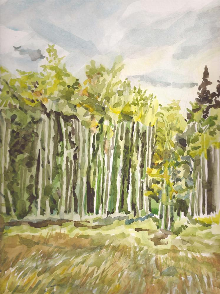 """Aspens at Alvarado Campground, Westcliffe, CO"" original fine art by Jean Krueger"
