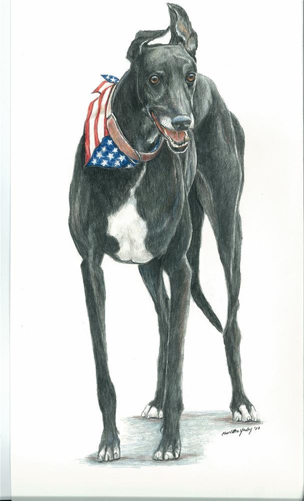 """""""patriotic greyhound"""" original fine art by Charlotte Yealey"""