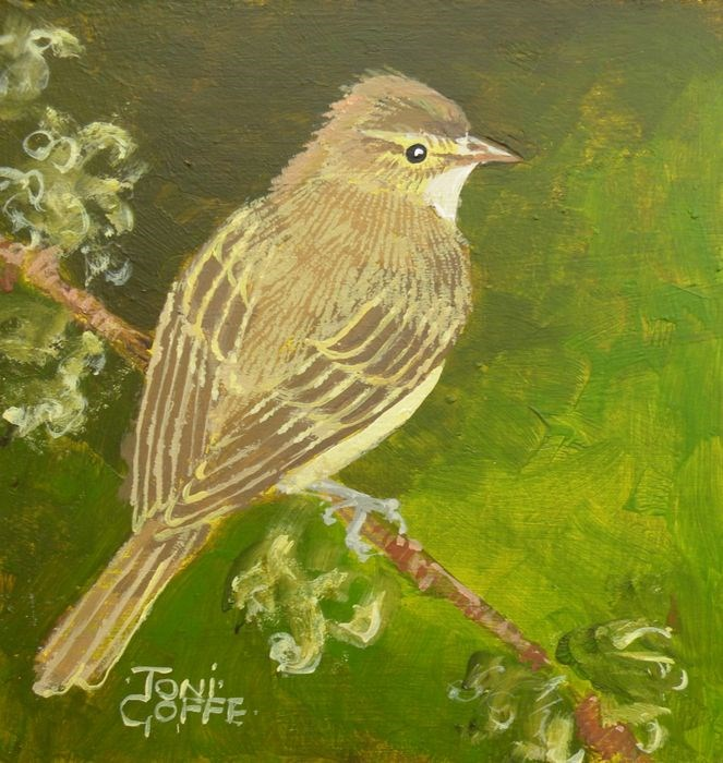 """Yellow Warbler"" original fine art by Toni Goffe"