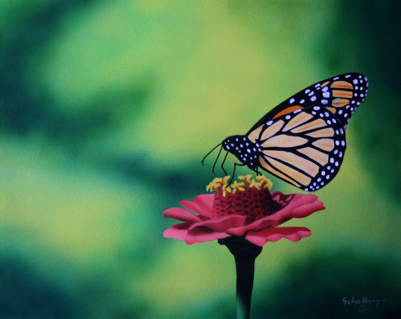 """""""Pink Zinnia with Butterfly"""" original fine art by Fred Schollmeyer"""