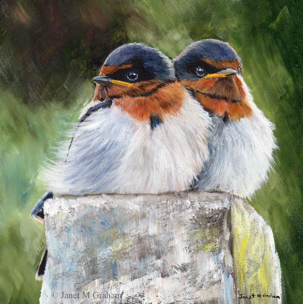 """Baby Swallows"" original fine art by Janet Graham"