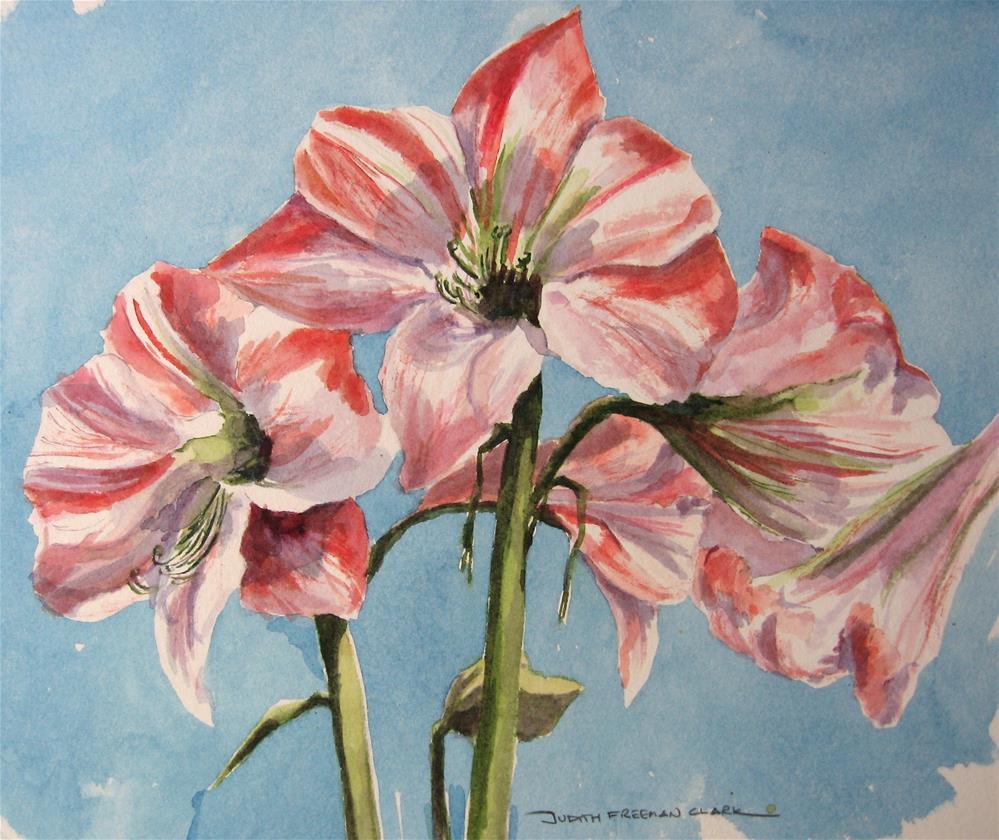 """Amaryllis, study"" original fine art by Judith Freeman Clark"