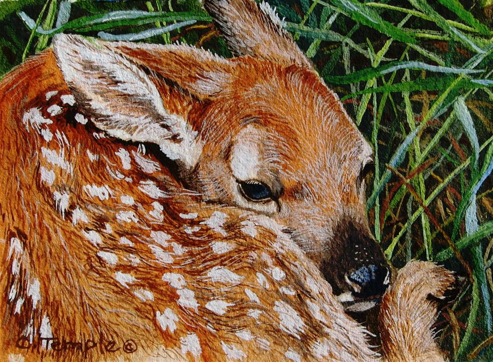 """""""Whitetail Fawn"""" original fine art by Catherine Temple"""