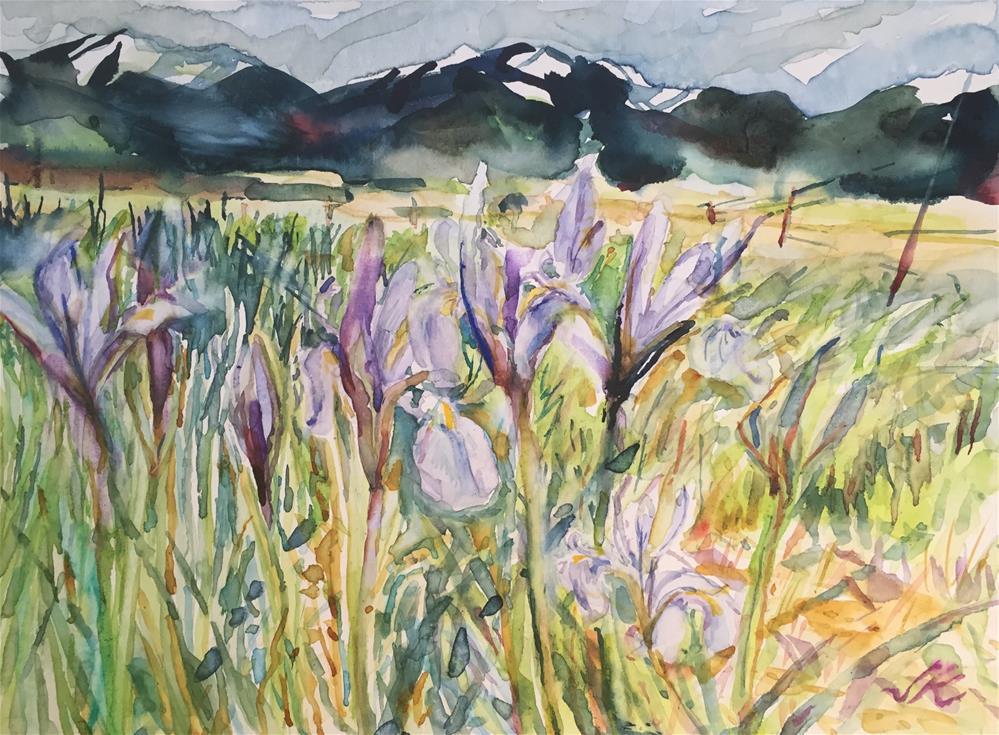 """Wild Iris"" original fine art by Jean Krueger"