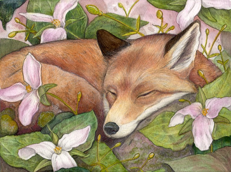 """Sleeping Fox"" original fine art by Lisa Ferguson"