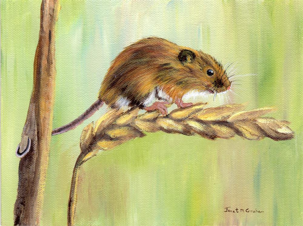 """Field Mouse"" original fine art by Janet Graham"